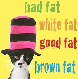 brown fat good white fat bad